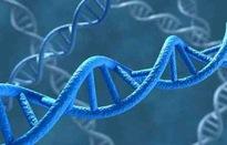 """Somalia lần đầu tiên sử dụng ADN để kết án các """"yêu râu xanh"""""""