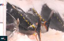 Tham gia tổ đội khai thác hải sản, ngư dân linh hoạt giảm chi phí chuyến biển