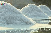 Hạt muối - Kết tinh từ mồ hôi, hơi biển và khát vọng của diêm dân