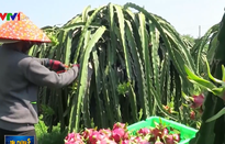 Thị trường Trung Quốc ngày càng khắt khe với trái cây nhập khẩu