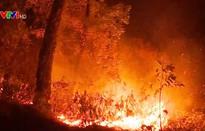 Cháy rừng ở Hà Tĩnh
