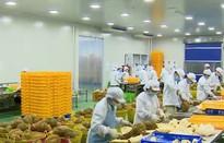 Xuất khẩu rau quả sang Trung Quốc giảm đột biến