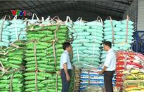 Thị trường lúa gạo ĐBSCL chuyển biến tích cực sau dỡ bỏ hạn ngạch xuất khẩu