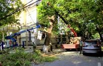 Hải Phòng rà soát, xử lý 119 cây xanh có nguy cơ mất an toàn