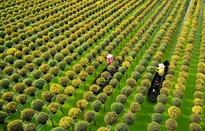 Về Sa Đéc, trải nghiệm sắc xuân miệt vườn