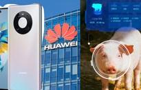 Smartphone bết bát, Huawei chuyển hướng… nuôi lợn bằng AI