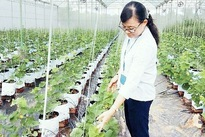 Encouraging enterprises to invest in agricultural development