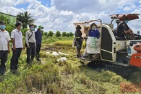 Thap Muoi rice harvesting aligned with pandemic prevention