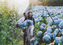 Trải nghiệm tại những cánh đồng hoa ở Đà Lạt
