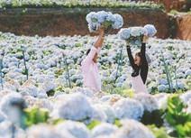 Vườn cẩm tú cầu đẹp ngất ngây khiến bạn muốn đến Đà Lạt ngay
