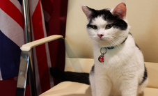 Bổ nhiệm mèo làm việc tại Đại sứ quán Anh