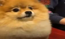 Chú chó dễ thương gây sự chú ý trên mạng xã hội