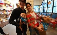Quán cà phê dành cho cún cưng đầu tiên tại New York