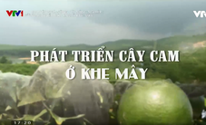 Chuyện nhà nông với nông nghiệp: Phát triển cây cam ở Khe Mây