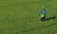 Mở rộng hạn điền để tích tụ ruộng đất: Thực tế trong tương lai gần không thể đảo ngược
