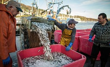 Nghị viện châu Âu nóng trước vấn đề dùng điện đánh cá