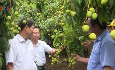 Bắc Giang thúc đẩy tiêu thụ vải thiều