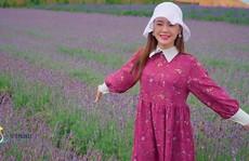 Cùng check in cánh đồng hoa oải hương