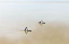 """""""Đời cò"""" - Ngụp lặn mưu sinh và cánh chim không biết mỏi mệt"""