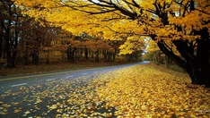 Russia's golden autumn attracts Vietnamese tourists
