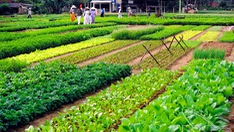 Rising trend of agritourism