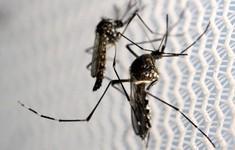 Số ca nhiễm Zika tại Ấn Độ tăng mạnh