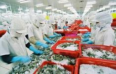 Mục tiêu xuất khẩu tôm 10 tỷ USD/năm: Chưa cán đích đã lao đao