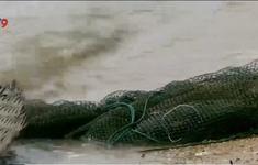 Nguy hiểm từ lưới đánh bắt bị vứt bừa trên biển của ngư dân