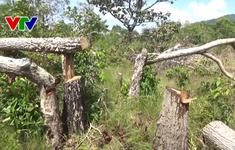 Lại xảy ra phá rừng ở Khu bảo tồn thiên nhiên Tà Cú, Bình Thuận