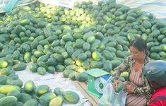 Dưa hấu nghịch mùa đạt giá cao, nông dân vùng ĐBSCL phấn khởi