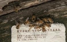 Ba Lan: Giấy có thể làm thức ăn cho côn trùng