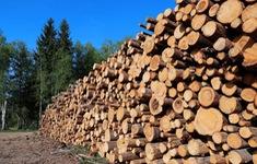 Quy định của Liên minh châu Âu về khai thác và kinh doanh gỗ