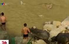 Lãnh đạo Bộ Tư lệnh Biên phòng trả lời về việc buôn lậu gia súc tại Lào Cai