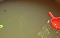 Chậm đầu tư hệ thống xử lý nước, hàng trăm hộ dân dùng nước bẩn
