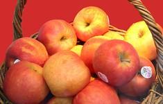 Mã vạch dán trên hoa quả nhập khẩu cho biết thông tin gì?