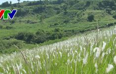 Thông điệp cuộc sống từ đồi cỏ tranh