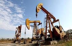 """Giá dầu có thể tăng gấp đôi nếu Saudi Arabia dùng dầu mỏ làm """"vũ khí"""""""