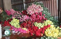 Chưa đến Ngày Nhà giáo Việt Nam 20/11, giá hoa hồng đã tăng mạnh