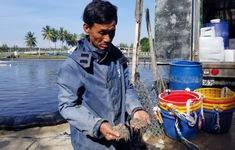 Quảng Nam: Cả ba hồ tôm chết đứng sau 1 đêm