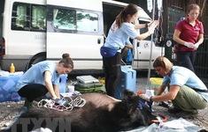 FOUR PAWS tiếp nhận cá thể gấu chó nuôi nhốt nhiều năm tại Đà Lạt
