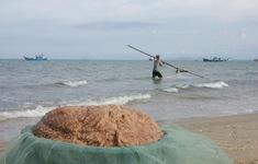 Quảng Bình: Ngư dân trúng đậm mùa ruốc biển