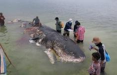 Cá voi chết ở Indonesia có 1.000 mảnh nhựa trong bụng