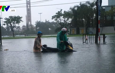 Nhiều diện tích trồng rau tại Đà Nẵng bị ngập sâu do mưa lớn