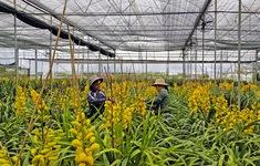 Đà Lạt trồng 1.500ha hoa phục vụ dịp Tết