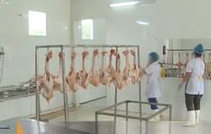 Hiệu quả mô hình hỗ trợ chăn nuôi theo chuỗi