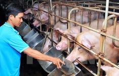 Công nghệ mới truy xuất nguồn gốc trong chăn nuôi