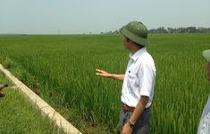 Phát triển chuỗi giá trị lúa gạo cho các hộ sản xuất nhỏ định hướng thị trường