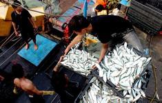 Ngư dân Hà Tĩnh được mùa cá trái vụ