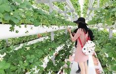 Lâm Đồng: Du lịch canh nông phải có chỗ để xe, nhà vệ sinh
