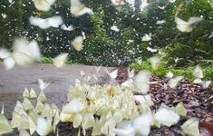Mê mẩn rừng bươm bướm trong vườn quốc gia Cúc Phương